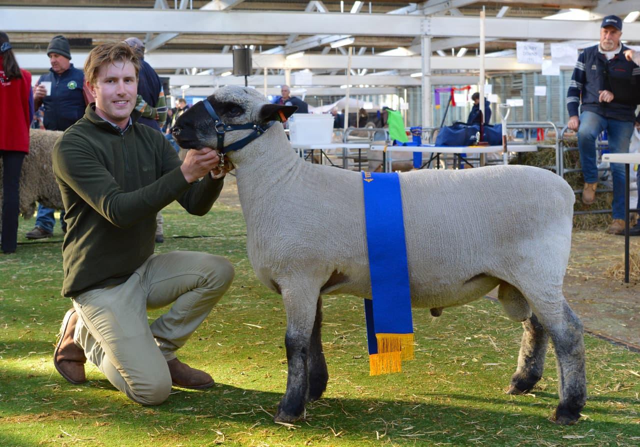 victorian-sheep-show-ballarat-2019-man-with-sheep