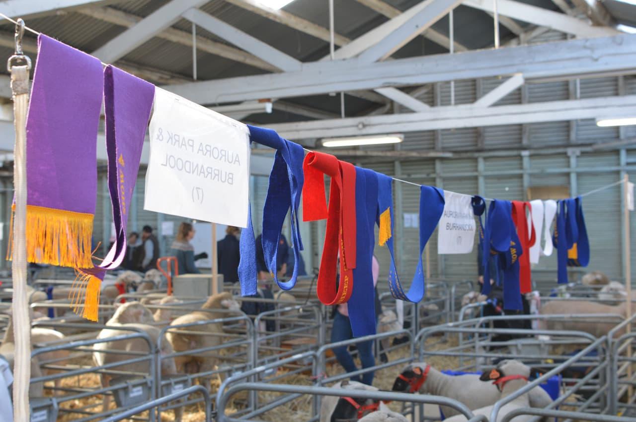 victorian-sheep-show-ballarat-2019-scarves
